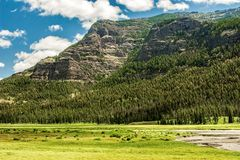 Gray Cliffs. And meadow in Wyoming stock photography