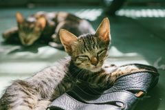 Gray Coated Cat on Black Leather Sandals Stock Images