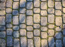 Gray cobbles in the park royalty free stock photo