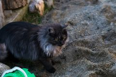 Black and gray colored cat at the sandy playground of children. Black and gray colored cat at the sandy playground stock photo