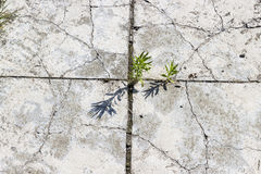 Gray concrete blocks pavement Royalty Free Stock Photo