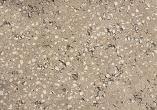 Gray concrete texture closeup Stock Photos