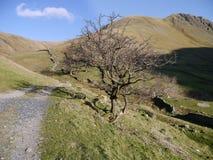 Gray Crag, Lake District Stock Photography