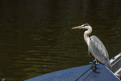 Gray crane is on the boat with green water Stock Photography