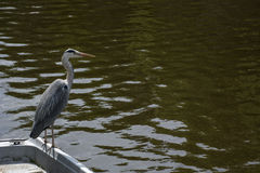 Gray crane is on the boat with water Royalty Free Stock Photography