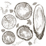 Gray cross section of tree trunk and leaves set. Round and oval cross section of tree trunk. Wooden texture with tree rings. Hand drawn gray  tree trunk rings Stock Photos