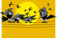 Gray crows Stock Photo