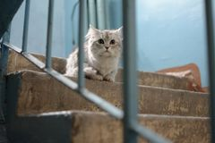 Cute cat looking for tender hands royalty free stock photos