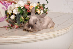 Gray cute handmade rabbit Royalty Free Stock Images