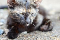 Gray cute nice kitten with closed eyes resting on nature. Close-up stock photo