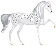 The gray in the dappled horse Royalty Free Stock Images