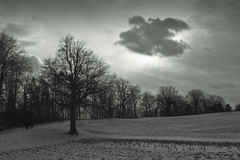 Gray day. Clouds and skies over alone tree in the evening royalty free stock photography