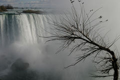 Gray day. At Niagara falls. main focus on the foreground (tree stock images