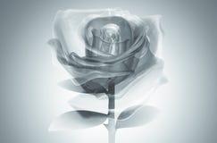 gray di vetro di rosa 3D Fotografia Stock Libera da Diritti