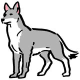 Gray dog Royalty Free Stock Photos