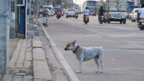 Gray Dog desabrigado na estrada com passagem de carros e de motocicletas Ásia, Tailândia video estoque