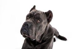 Dog on a white background. royalty free stock photo