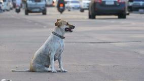 Gray Dog Sits desabrigado na estrada com passagem de carros e de motocicletas Ásia, Tailândia video estoque