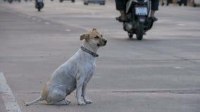 Gray Dog Sits desabrigado na estrada com passagem de carros e de motocicletas Movimento lento Ásia, Tailândia vídeos de arquivo