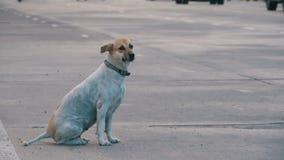 Gray Dog Sits desabrigado na estrada com passagem de carros e de motocicletas Movimento lento Ásia, Tailândia filme