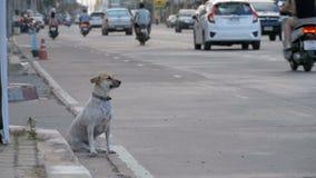 Gray Dog Sits sin hogar en el camino con el paso de los coches y de las motocicletas Cámara lenta Asia, Tailandia metrajes