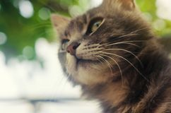 Gray domestic cat with a curious and surprised look on the background of green bokeh. curiosity and uncertainty, excitement. From the event. Interest and stock photos