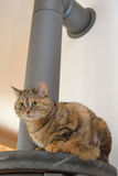 Gray domestic cat on oven Royalty Free Stock Photo