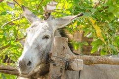 Gray donkey. On the farm Stock Images
