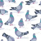 Gray Doves in Motion Seamless Pattern. Seamless pattern made with rock doves on white background. Bluish pigeons in motion – walking and eating grains royalty free illustration