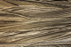 Gray dry palm leaves in a pile close-up. natural surface texture. A gray dry palm leaves in a pile close-up. natural surface texture royalty free stock photo