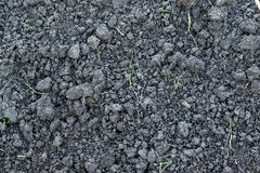 Gray soil with sprouts of green grass. Gray dry soil with sprouts of green grass Stock Photos