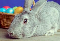 Gray Easter Bunny Imagenes de archivo