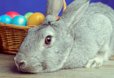 Gray Easter Bunny Stock Images