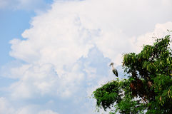 Gray egret in tree. With blue sky stock photos