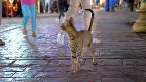 Gray Egyptian Cat Wanders desabrigado através da rua movimentada noturna de Egito video estoque