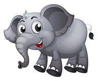 A gray elephant Stock Photos