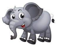 A gray elephant Stock Photos