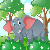 Gray elephant in the jungle Stock Image