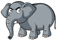 Gray elephant with serious face. Illustration Stock Image