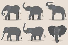 Gray elephant set Royalty Free Stock Photo