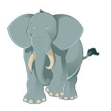 Gray elephant Stock Images