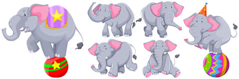 Gray elephants in different actions. Illustration Stock Photography