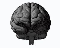 Gray engraving brain in front view on white BG Stock Photography