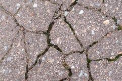 Gray bursting asphalt with green moss Stock Photo