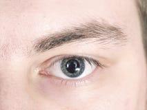 Gray eye eyebrow eyelashes macro Royalty Free Stock Photography