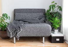 Gray fabric chair and plants in the living room. Gray fabric chair with cozy throw, and green plants in the living room Royalty Free Stock Images