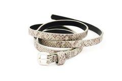 Gray fake leather belt, snake pattern Stock Photo