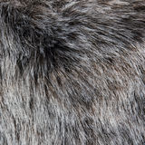 Gray feather pattern Stock Photography
