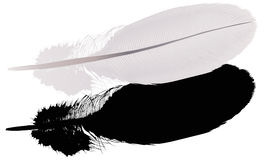 Gray feather with shadow on white Stock Image