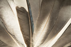 Gray feathers Stock Image